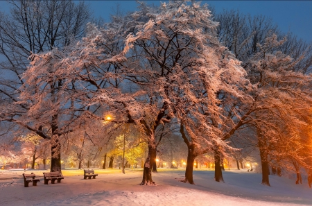 Blossom - rest, bench, dusk, beautiful, park, twilight, trees, winter, cold, blossom, snow, ice, walk, branches, light, frost
