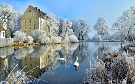 Winter beauty - beautiful, lake, swans, winter, cold, pond, serenity, snow, ice, village, reflection, frozen, scene, tranquility, frost