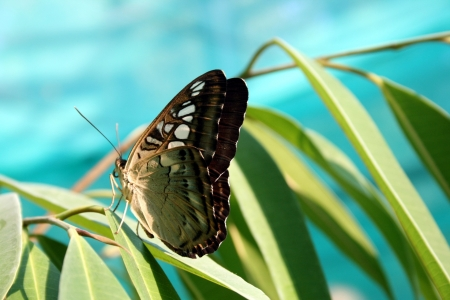 Butterfly - insect, Butterfly, animal, leaf