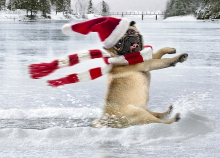 Partieeee! - hat, snow, christmas, winter, scarf, dog, animal, puppy, white, funny, craciun, red, santa, cute