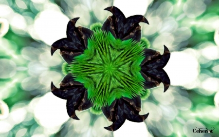 Spider star - texture, art, black, pictura, white, by cehenot, star, green, abstract, painting