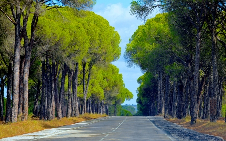 Portugal - highway, europe, travel, portugal, trees