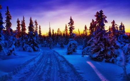 Winter Sunset - snow, winter, sky, sunset, trees, road, nature