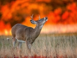 deer and fire