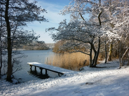 Winter at the River - riverside, trees, snow, pier