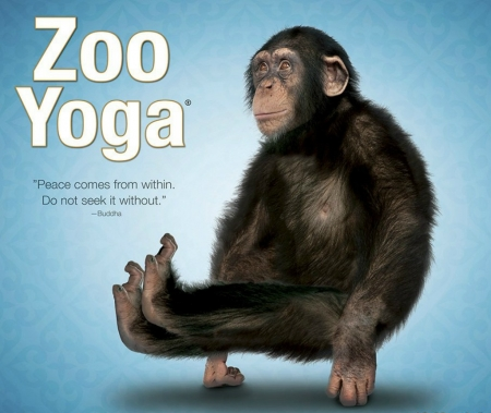 Yoga monkey - funny, yoga, blue, animal, monkey