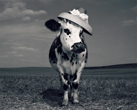 Fency cow - fency, cow, black, animal, hat, jean baptiste mondino, bw, vaca, funny, white