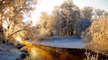 Golden River - Tree, Nature, River, Winter