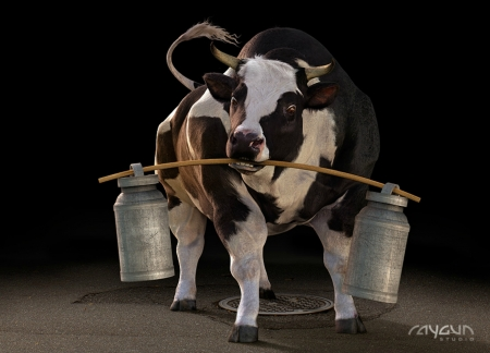 More milk - cow, vaca, milk, funny, creative, humour, animal, situation