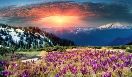 Flowery Landscape - mountain, snow, mountains, flowers, nature, sunset, clouds