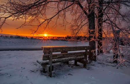 Winter sunset - rest, glow, fiery, bench, beautiful, sunset, park, trees, sky, winter, snow, frost