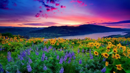 Beautiful Flowers Scenery Other Nature Background Wallpapers On