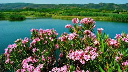 Flowers at Greenery Lake Shore - shore, emerald, lake, green, bank, flowers, nature, river, pink