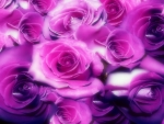 Magical Roses ♥♥♥