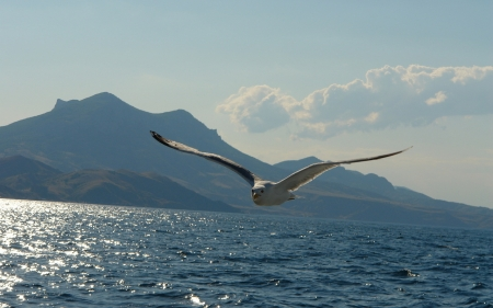 Birds Flying above the Sea - flying, mountin, sea, bird, clouds, nature