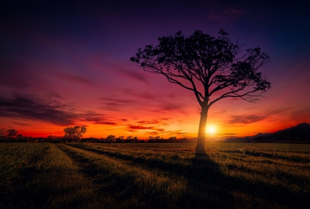 Sunset - tree, nature, sky, Sunset
