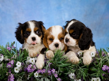 Cute puppies - cute, loyal, animal, puppy