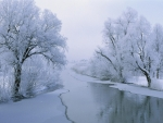 Dreamy Winters