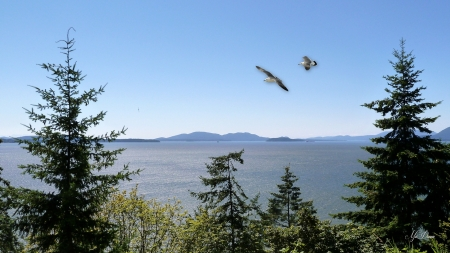 Enjoy the View - beach, Pacific Northwest, birds, island, trees, Firefox Persona theme, sea