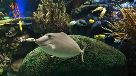 Ripley's Aquarium,Toronto - Large, fish, aquarium, friends