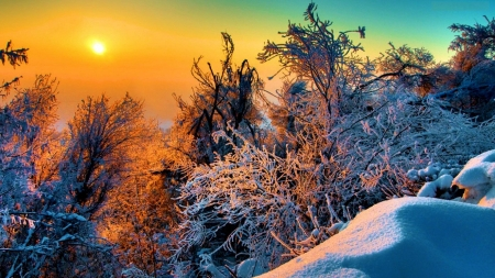 Winter Sunset - sunset, sky, winter, twigs, snow, tres, ice, nature, season