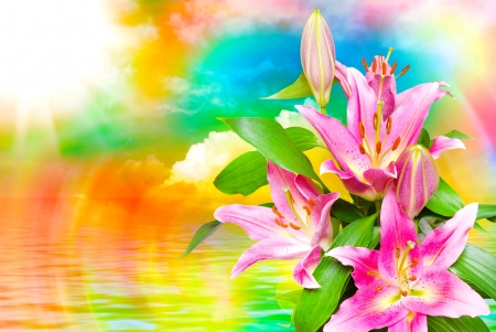 Flowers background - pretty, colorful, lovely, lilies, spring, rainbow, floral, beautiul, flowers, reflection
