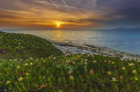 At the Edge of the Sea,Greece - greece, flowers, nature, sunset, island, sea, landscape