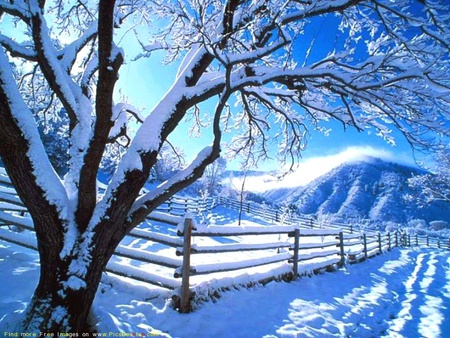 cold weather - tree, winter, nature, wallpaper