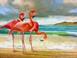 Flamingos by The Shore