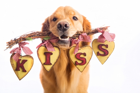 Image result for Happy Kiss Day dog