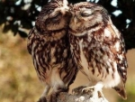 Just Two Owls