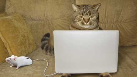 Funny Cat - funny, animal, cute, mouse, cat, laptop