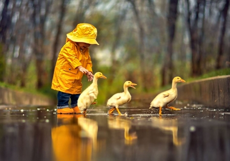 Rainy Day Friends F2Cmp - photo, beautiful, animal, photography, boy, bird, avian, wide screen, wildlife, ducklings, raincoat