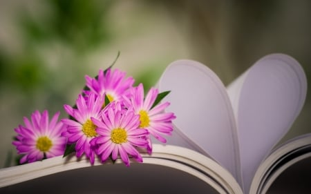 With ♥ - book, flowers, bokeh, heart