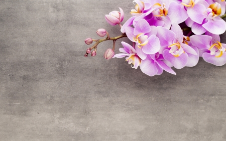 Orchids - texture, pink, orchid, flower