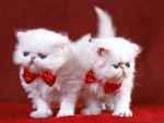 Kittens with bow ties