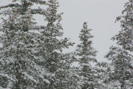 Snow storm in Teton Valley, Idaho - Snow, Winter, Trees, Landscape