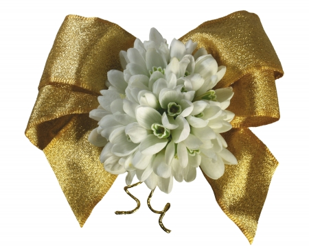 Happy Spring! - snowdrop, card, golden, bow, spring, white, flower