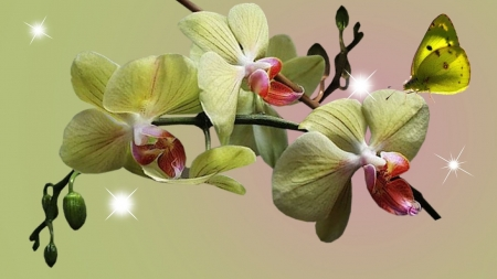 Orchid - flower, nature, butterfly, orchid
