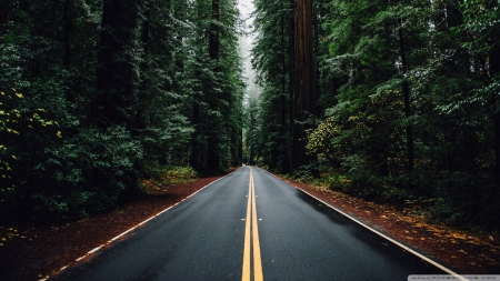 Beautiful Road - roads, green, nature, forests, trees