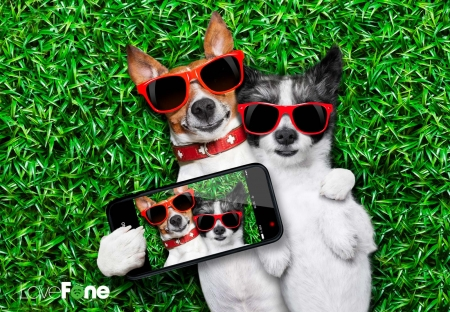 Happy Valentine's Day! - red, grass, caine, kack russell terrier, selfie, valentine, sunglasses, cute, green, phone, funny, couple, puppy, dog