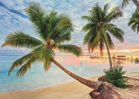 Beach in French Polynesia - palmtrees, water, pier, clouds, sky, sea