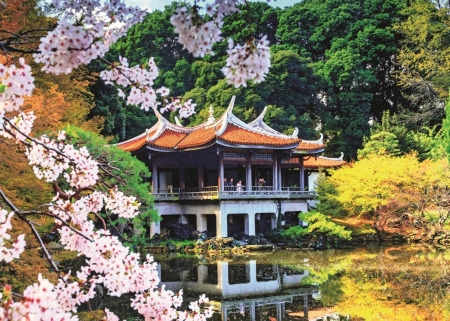 Spring Blossoms in Japan - house, park, reflection, pond