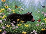 Black Bear and Butterflies F