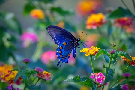 Spring beauty - colorful, butterfly, flight, flowers, garden, beautiful, spring, freshness
