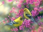 Goldfinches & Redbud