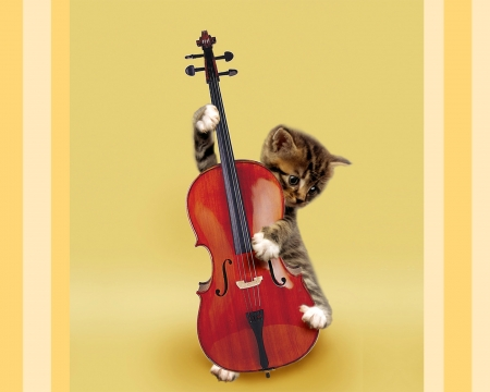 Talented kitten - collage, yellow, animal, instrument, by cehenot, funny, pisica, kitten, violin, cute, cat