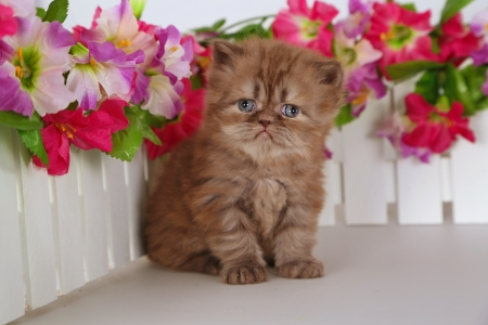 Flowers lover - garden, love, sweet, flowers, kitty, adorable, kitten, cute, fluffy, cat
