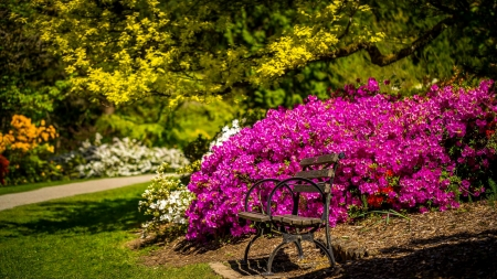 Spring park - rest, lovely, grass, greenery, bench, beautiful, spring, park, trees, freshness, bush, flowers, walk