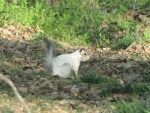 Bianca the White Squirrel on Alert